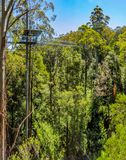 Great Otway National Park. Otway fly tree top walk. Walk among the tops of trees in the Australian forest, near the town of Apollo Bay which is located on the stock image