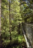 Great Otway National Park. Otway fly tree top walk. Walk among the tops of trees in the Australian forest, near the town of Apollo Bay which is located on the royalty free stock images