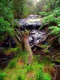 Great Otway National Park Waterfall Royalty Free Stock Image
