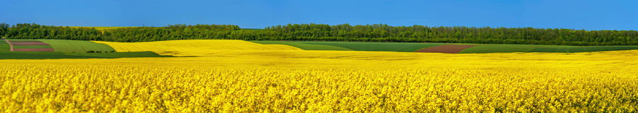Great Panoramic View Of Field Royalty Free Stock Image