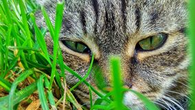 Cat`s face in grass - large-scale Royalty Free Stock Image