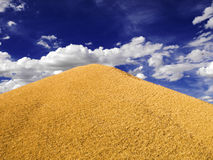 Great pile of wheat. Traditional summer image in the countryside. Harvesting series Stock Images