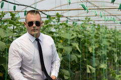 Great plants greenhouse. Proud man, Modern businessman in his greenhouse and feeling confidence. Young man Royalty Free Stock Photo