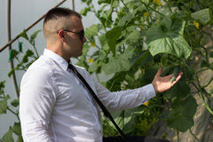 Great plants. Modern businessman looking at plants in his greenhouse and feeling confidence Royalty Free Stock Image
