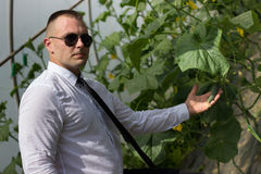Great plants. Modern businessman looking at plants in his greenhouse and feeling confidence Stock Images