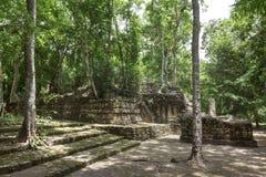 Great Plaza of Mayan ruins at Calakmul Stock Photo