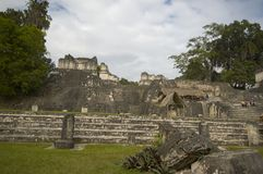 Great plaza tikal guatemala Royalty Free Stock Images