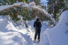 Snowshoeing in Laurentides mountains at Val David stock images