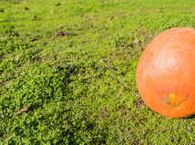 Great pumpkin. Resting in the meadow of green grass Royalty Free Stock Photo