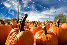 The Great Pumpkins Royalty Free Stock Image