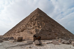 Great Pyramid of Giza. With a donkey standing out front Royalty Free Stock Images
