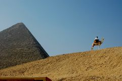The Great Pyramid of Giza with blue sky and camel. The Great Pyramid of Giza is the oldest and largest of the three pyramids in the Giza pyramid complex Stock Photography