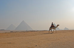 Great Pyramid of Giza, Egypt. A man riding camel at the Great Pyramid of Giza in Cairo, Egypt. Photo taken on February 27, 2007 Stock Photos
