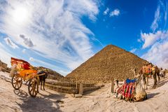 The great pyramid of Giza. Horse with carriage and camels in front of the great pyramid of Giza, Egypt Royalty Free Stock Images