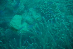 Great reef Royalty Free Stock Photography
