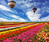 Great rural field with flowers Royalty Free Stock Photos
