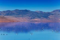 Great Salt Lake met het zwemmen op oppervlaktevogels Stock Afbeelding