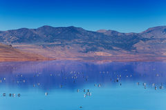 Great Salt Lake with swimming on surface birds Stock Image