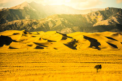 Great Sand Dunes Hot Golden Sunset Royalty Free Stock Photo