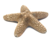 Great sea star on white Royalty Free Stock Image
