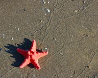 Great single red starfish lying on tropical sea Beach Royalty Free Stock Image
