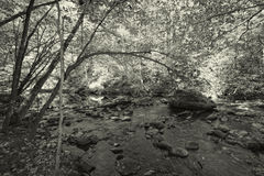 Great Smokey Mountain Park Forest Black and White Stock Photography