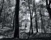 Great Smokey Mountain Park Forest Black and White Stock Image
