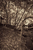 Great Smokey Mountain Park Forest in Sepia Tones Stock Photo