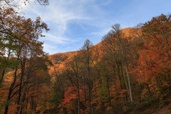 The great smokey mountains colorful nature. Royalty Free Stock Image