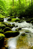 Great Smokey Mountains National Park. A creek in Great Smoky Mountains National Park Stock Photo