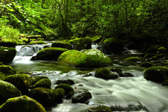 Great Smokey Mountains National Park. A river running through the Great Smokey Mountains National Park Royalty Free Stock Photo