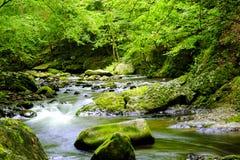 Great Smoky Mountain National Park Royalty Free Stock Photos