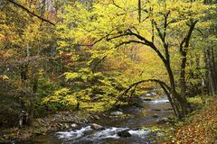 The Great Smoky Mountains in autumn royalty free stock photos