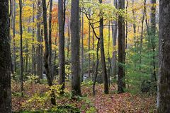 The Great Smoky Mountains in autumn stock photo
