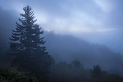 Great Smoky Mountains Fog. An early morning fog rolling up a mountain pass in the Great Smoky Mountains Royalty Free Stock Image