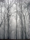 Great Smoky Mountains Forest Wintry Scene. Royalty Free Stock Photography