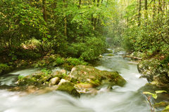 Great Smoky Mountains national park Stock Photography