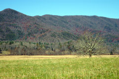 Great Smoky Mountains National Park. Cades Cove royalty free stock photography