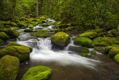 Great Smoky Mountains National Park Gatlinburg TN. Roaring Fork River lush green forest landscape photography Stock Image