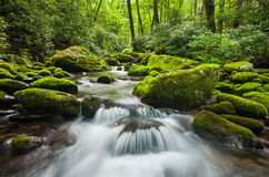 Great Smoky Mountains National Park Roaring Fork Cascade Stock Image