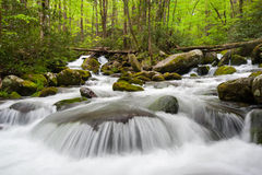 Great Smoky Mountains National Park Roaring Fork Cascade Royalty Free Stock Photo