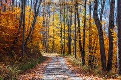 Great Smoky Mountains park, GSMNP Zdjęcie Royalty Free