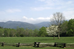 Great Smoky Mountains in Spring. Beautiful springtime view of Cades Cove, Great Smoky Mountians, Tennessee with mountains in the background and dogwood trees in Royalty Free Stock Image