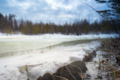 Great snow thawed patch in the woods spring. Royalty Free Stock Image