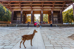 Great South Gate (Nandaimon) at Todaiji Temple in Nara Royalty Free Stock Photos