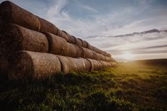 Big stacks of hay on a field. Great stacks of hay captured during sunset royalty free stock images