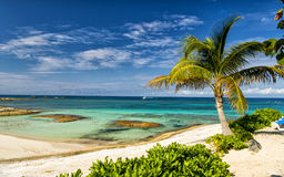 Great Stirrup Cay beach. Beautiful bahamian beach with tropical plants of green palm trees blue clean atlantic ocean water and sandy coast in sunny summer Stock Images
