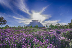 The Great Stupa of Universal Compassion Bendigo. Beautiful view of the Great Stupa of Universal Compassion at Bendigo. Scenic view with a field of lavender and Stock Photos