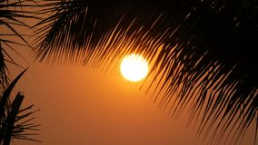 Great sunset red sun against background of palm leaves. Great sunset red sun against the background of palm leaves stock footage
