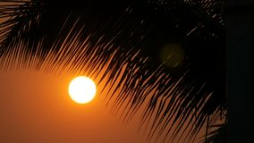 Great sunset red sun against background of palm leaves. Great sunset red sun against the background of palm leaves stock video footage
